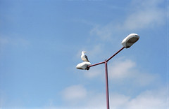 The Gull And The lamp (b-52) Tags: italy nature birds kodakportra160vc 135mm portra160vc olympusom zuiko13528