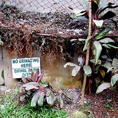 100_3325-No Urinating Here (Sir Mildred Pierce) Tags: baguiocity burnhampark