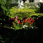 Flowers and shadows thumbnail
