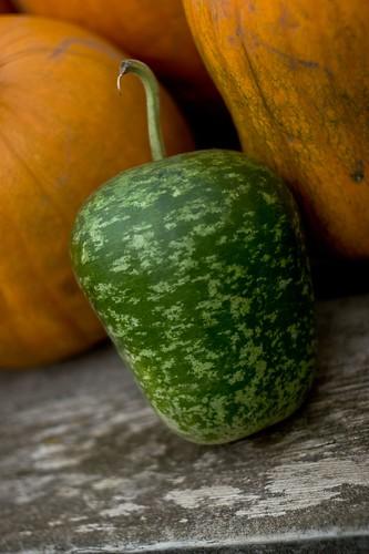 Pumpker-Melon