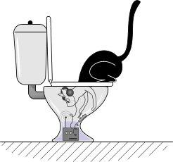 gatos trabajan como espias en el water