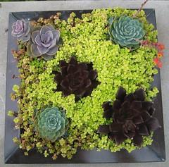 Succulents - United States Botanic Garden