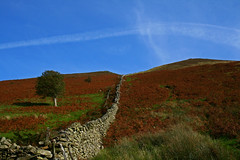 Dry Stone Wall - Lake District (Ian Lambert) Tags: blue autumn england sky sun lake cold tree stone wall one district lakes dry cumbria abigfave aplusphoto theunforgettablepictures