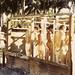 Communal showers, Hollandia, New Guinea