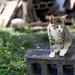 _E5E2862 作者 Cat Scape的KT