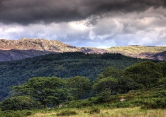 Wales, Snowdonia: Treeline (Tim Blessed) Tags: trees sky mountains nature clouds landscapes countryside scenery northwales aplusphoto singlerawtonemapped