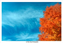 blue and orange (Mike Wood Photography) Tags: blue sky orange ontario tree london up clouds eos looking near arr wispy allrightsreserved mikewood 400d aplusphoto elitephotography mikewoodphotographycom mikewoodphotography mwptrav circularpolarizerattherightangle