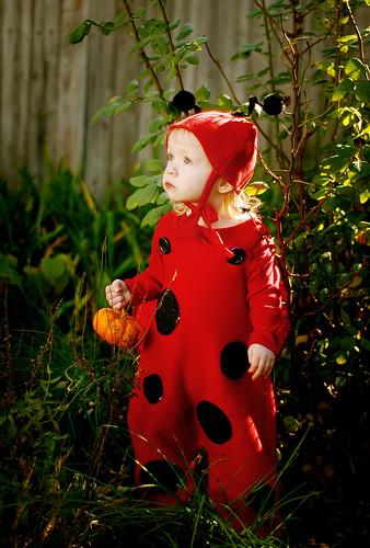 {E} the ladybug