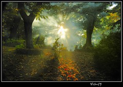 Ghost (sirVictor59) Tags: autumn light italy halloween nature colors angel automne topf50 nikon bravo europe italia nikond70 smoke magic ange ghost ufo topf300 angels horror otoo angelo sole topf150 paranormal magical autunno topf100 humo soe fantasma viterbo topf250 topf200 1870mm luce lazio hallowen bosco fumo fume ngel topf400 topf350 sonbahar tuscia supershot abigfave sanmartinoalcimino  aplusphoto ysplix colourartaward perfectsunsetssunrisesandskys monticimini atardeceryamanercer multimegashot rubyphotographer  sirvictor59 misticzone