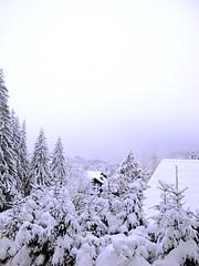 Les Ca-Snow  !!