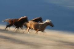galloping (soulvision) Tags: blurr wildhorses pentictonbc