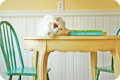 HALP! (simple tess) Tags: pet white home kitchen cat table aqua turquoise cottage kitty craigslist sakura dining screaming yelling stretching yawning mouthopen turkishangora dinette paleyellow lolcats birdsongs mysweetvegan