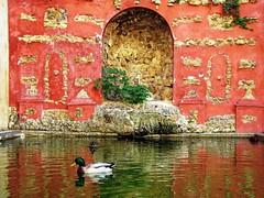 Reales Alcázares (Graça Vargas) Tags: españa duck sevilla spain canons ph227 realesalcázares graçavargas ©2008graçavargasallrightsreserved 7710160109