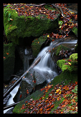 Welzheim waterfall - VII (Ralph Oechsle) Tags: autumn leaves waterfall moos creel welzheim