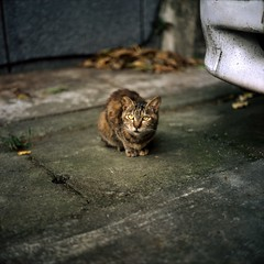 Don't Bother Me!  (Daa) Tags: 120 6x6 tlr animal analog cat square minolta taiwan slide taipei   twinlensreflex autocord    rdpiii fujifilmprovia100f minoltaautocord   epsongtx970 rokkor75mmf35