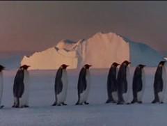 immagine di pinguini