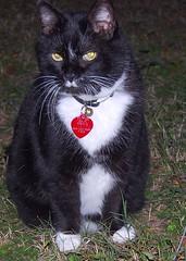 My Baby Ratt (MaryinClare) Tags: catnipaddicts