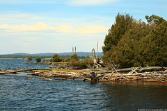 Tasmanien 55 (Eulinky) Tags: tasmania tassie tasmanien