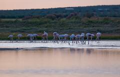 Desde lejos (Javi_Ramos) Tags: laguna malaga flamencos fuentedepiedra humedal