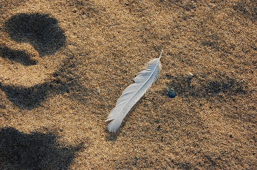 Seagull feather, Larry 1