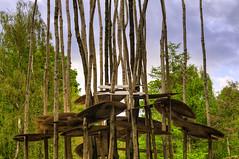Ecclesall Woods_170510_0051