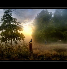 Early Birds (h.koppdelaney) Tags: life morning mist art nature beautiful beauty fog digital photoshop sunrise landscape gold early flying duck paradise peace symbol earth walk mother picture philosophy harmony romantic crow relaxation metaphor raven pilgrim symbolism psychology archetype romantik idream koppdelaney
