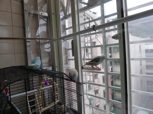 鳥籠放置在房間外的小陽台