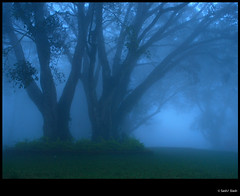 Amongst the Mist (sash/ slash) Tags: mist sash resort greenland palakkad nelliyampathy sajesh