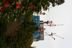 img_3543.jpg (DeviousZebra) Tags: tokyo sakura imperialpalace 20080402