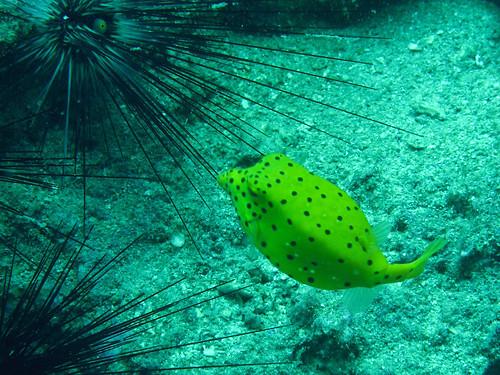 Vida marina en Ko Lanta