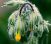 DSC_1625 (Sherwan™) Tags: flower macro nature fashion bug fly spring nikon mani erbil kurdistan watcher kurd sherwan irbil d40x کوردستان flowerwatcher
