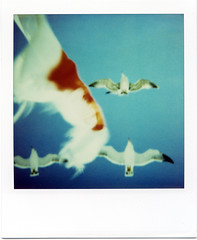 (masaaki miyara) Tags: sky japan polaroid design boat flying photo graphic flag seagull   landcamera       argylestreettearoom masaakimiyara