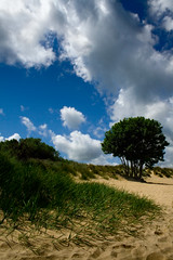 Sandbanks in the sunshine (Daniel Hodson) Tags: uk shadow sea sky cloud tree dan beach canon 350d sand flickr unitedkingdom daniel aib blues peter dorset flare canon350d canoneos350d bournemouth poole freelance hodson visualcommunication hoddo artsinstitutebournemouth danielpeterhodson danielhodson theartsinstitutebournemouth dhodson wwwdanielhodsoncouk httpwwwdanielhodsoncouk