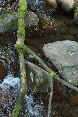 20080601風倒流木