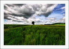 Cool Tayside Vista (Magdalen Green Photography) Tags: trees green nature rural landscape scotland dundee scottish tayside coolgreen coolnature cooltaysidevista
