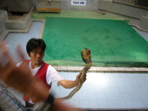 samui snake farm-サムイスネークファーム0001