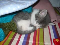 Vicente (Mary T ¬.*) Tags: cute lana cat rojo little gorro lindo gato gatito sabanas