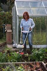 IMG_3108 (David Goose / MSI) Tags: david vegetables garden mantis gardening goose machines allotment cultivator tiller powertool dgp esystem rotavator mantistiller laveryrowe davidgoose
