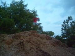 Thomas Jumping