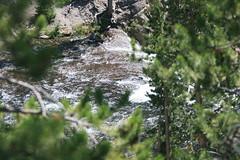 IMG_3458 (heatherldowning) Tags: flowers summer vacation montana elk gysers yellowstonepark
