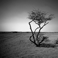 Alone, I Stand (Khaled A.K) Tags: blackandwhite bw tree photography desert sa jeddah saudiarabia myfriends khaled bnw ksa sigma1020mm loveyouall sigma1020 kashkari btwicanreadyourarabicwell