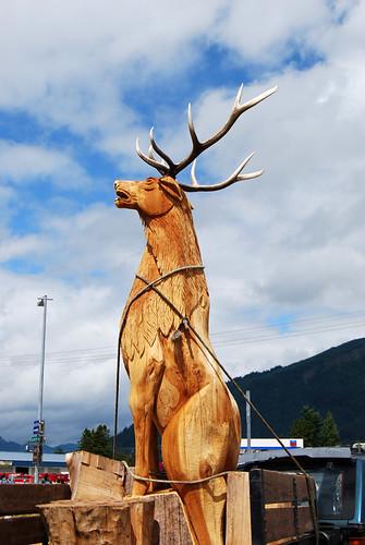 6-Morton Elk