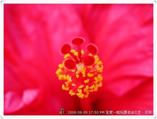20080809三芝淡水全家遊 (11)