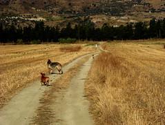 trekking d'estate (Mi che le) Tags: dog cane campagna calabria impressedbeauty