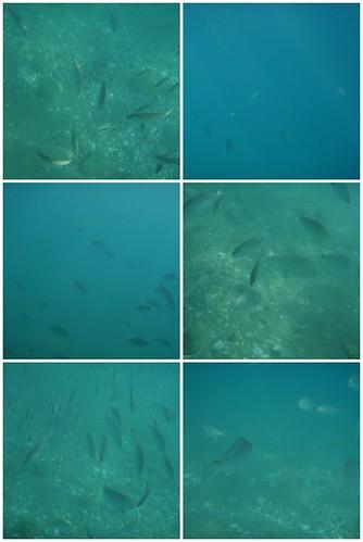 08/08/08 Fish