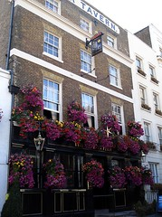 Picture of Star Tavern, SW1X 8HT
