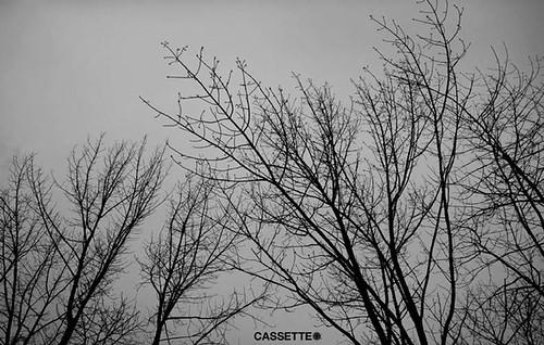 cassette (2)