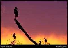 Sunset Maraboo (rafa márquez) Tags: africa sunset tanzania atardecer colorphotoaward infinestyle fiveflickrfavs fotoverde rafamárquez inspiks inspirationalpictures