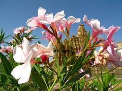 Kandariya Hidden (rodrigolab) Tags: flowers india temple hindu hinduism kamasutra khajuraho madhyapradesh westerngroup kandariyamahadev
