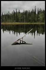 Finland 10 - Oulanka National Park (Guido Robino) Tags: wood cloud lake tree nature water finland lago eos nuvola forrest natura albero acqua finlandia bosco foresta oulanka canoniani